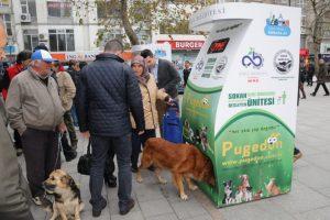 les animaux de la rue istanbul