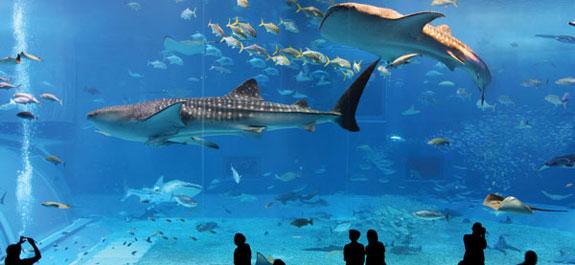 l'Aquarium d'Istanbul
