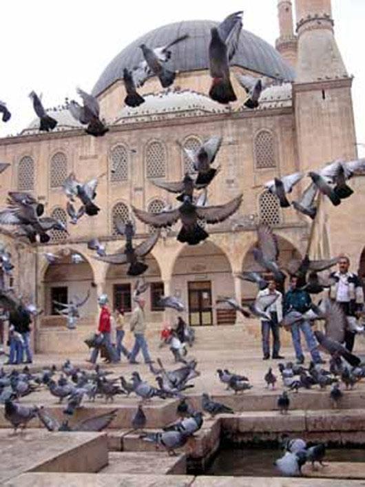 Les Oiseaux d'Istanbul